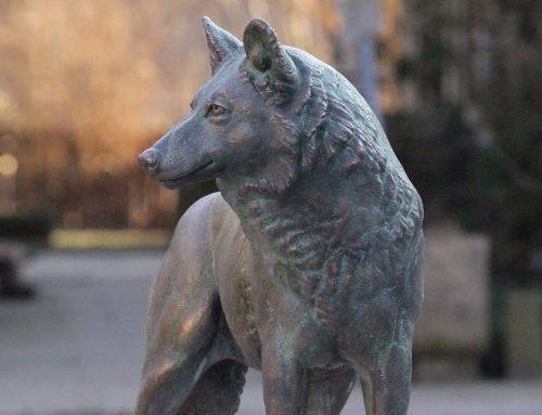 Schlösserachse – Auf den Spuren der Wölfe in NRW